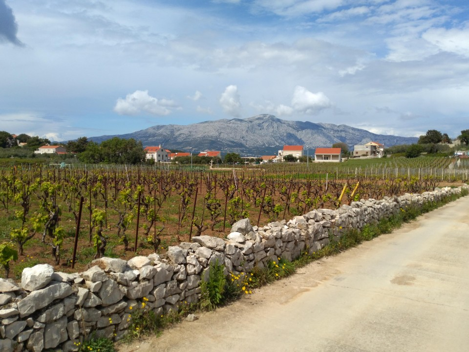 Photo Memories of Korcula - Lumbarda Vineyards